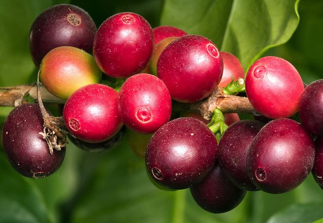Organic Coffee – Your Cup o' Joe?