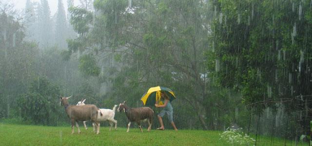 Downpour in Kona