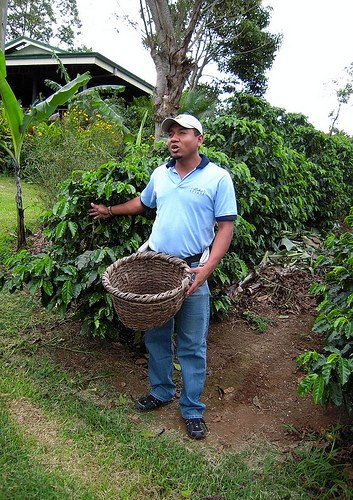 Costa Rica Coffee Farmer