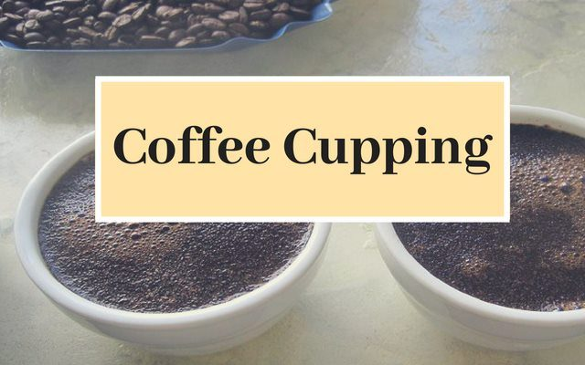 coffee cupping guide