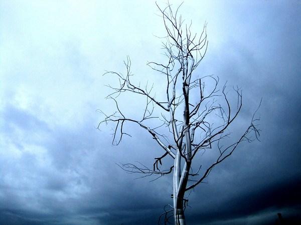 Metal Tree Seattle Sculpture Park