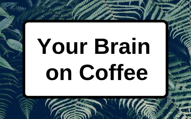 Your Brain on Coffee: How Caffeine Affects Brain Chemistry